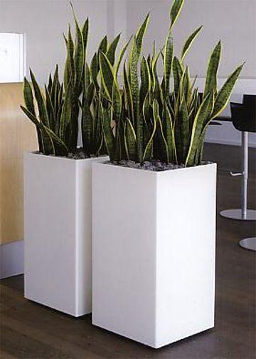 zimmerpflanzen modern beste inspiration f r ihr interior design und m bel. Black Bedroom Furniture Sets. Home Design Ideas