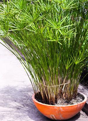 Nutzen von Büro und Zimmerpflanzen - Hiebinger Hydrokulturen und ...