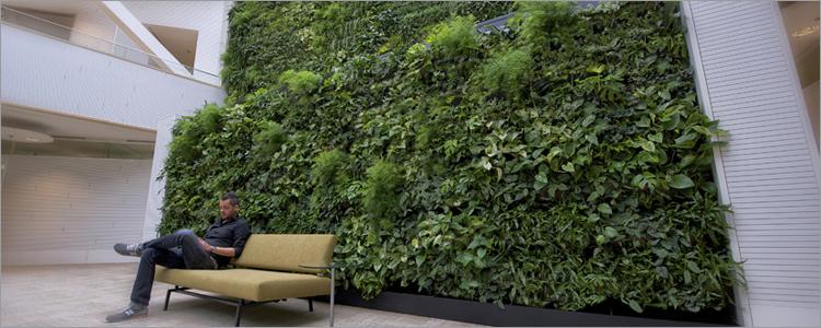 nutzen von b ro und zimmerpflanzen hiebinger hydrokulturen und wasserbrunnen. Black Bedroom Furniture Sets. Home Design Ideas